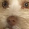 hoolsIScools's avatar
