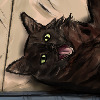 hoovcat's avatar