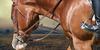 Horse-Equine-Art's avatar