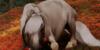 Horse-Pony-Manips's avatar