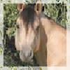 HorseAdoptablesHere's avatar