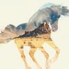 horsebreyercrazy1213's avatar