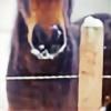 horselover110's avatar