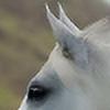 horselover2000's avatar