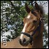 Horselover60's avatar