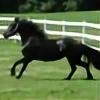 Horses4life-OviPets's avatar
