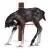 HorsesRunninByMe's avatar