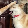 hreyas's avatar
