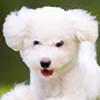 hsherran's avatar
