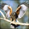 htmlcheeta's avatar