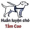 huanluyenchotamcao's avatar