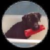 hundone's avatar