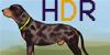 HuntingDog-Registry's avatar