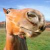 HuskyKangaroo's avatar