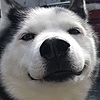 huskysees's avatar