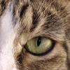 HygenicSewer's avatar