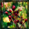 hypnose77's avatar