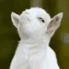 I-Bl33D-4RT's avatar