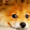 i-katie's avatar
