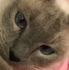 iammacey's avatar