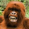 IceNeuro's avatar