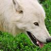IceTwolf2000's avatar