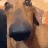 idontknowanametoput's avatar