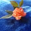 iffan0322's avatar