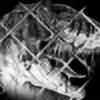 IHeartJurassicPark's avatar
