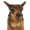 IIamatraitor's avatar
