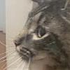 iiHoneyCombs's avatar