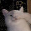 iiLemonGuts's avatar