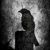 iinthewoodss's avatar