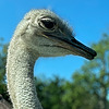 IKrines's avatar