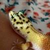 Iloveleopardgeckos's avatar