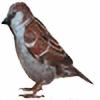 ilovemyhusky's avatar