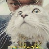 imyourcat66's avatar