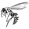 in3xplicit's avatar