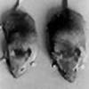 indigo-mouse's avatar