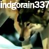 IndigoRain337's avatar
