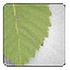 inmortalcry's avatar