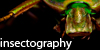 Insectography