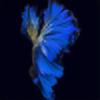 insparchi's avatar