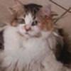 Insyirma's avatar