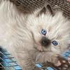 Inu-SessLover018's avatar