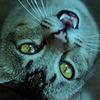 irfanaz12's avatar