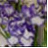 IrisGrundler's avatar