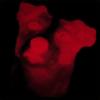 IRNatman's avatar