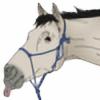 IronBrooke-Stable's avatar