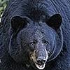Isaacsticker's avatar